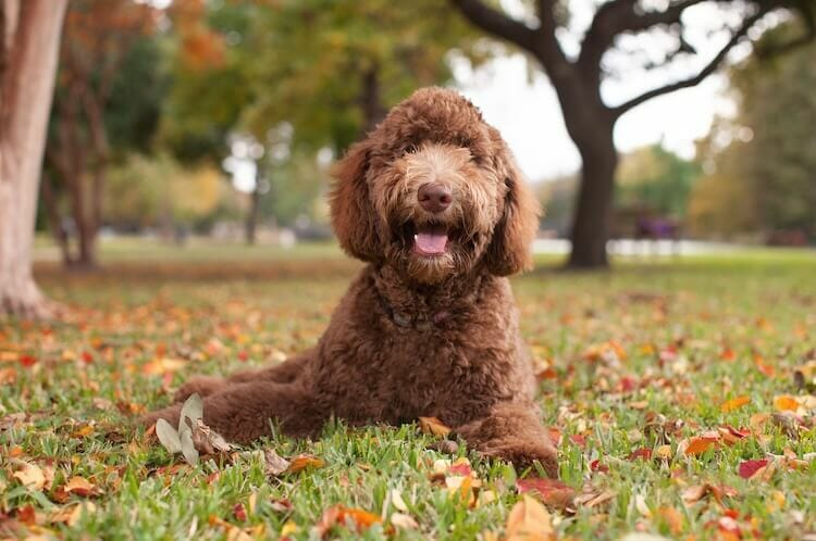 7 Best Low Energy Hypoallergenic Dogs for Every Household ...